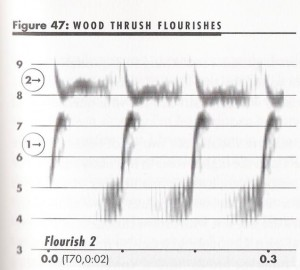 BWD--WoTh sonagram