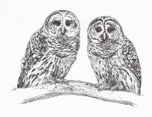 BWD--barred owls