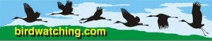birdwatching.com logo